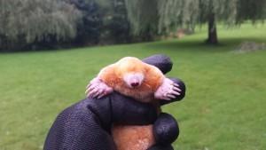 Albino mole