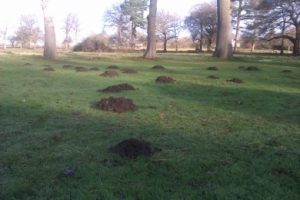 mole catcher in Elmbridge
