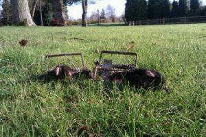Two moles caught in cobham